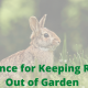 best fence for keeping rabbits out of garden