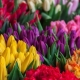 Best Flowers to Attract Bees to Vegetable Garden