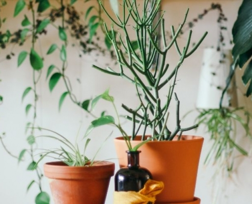 Best Plants for Container Gardening