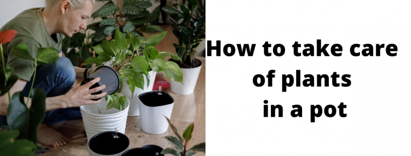 How to take care of plants in pots