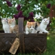 best things to keep cats off your garden