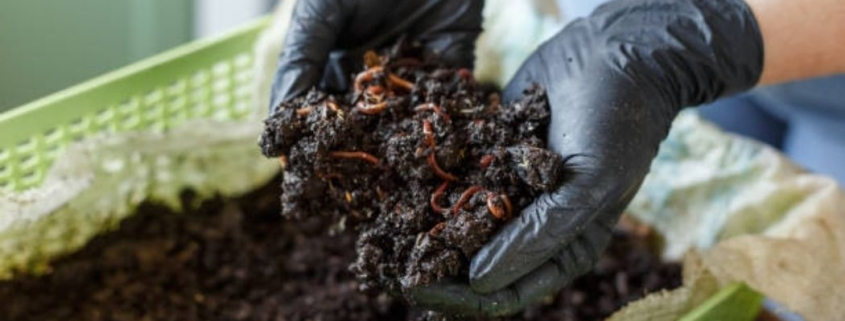 how much does vermicompost sell for