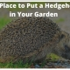 The Best Place to Put a Hedgehog House in Your Garden