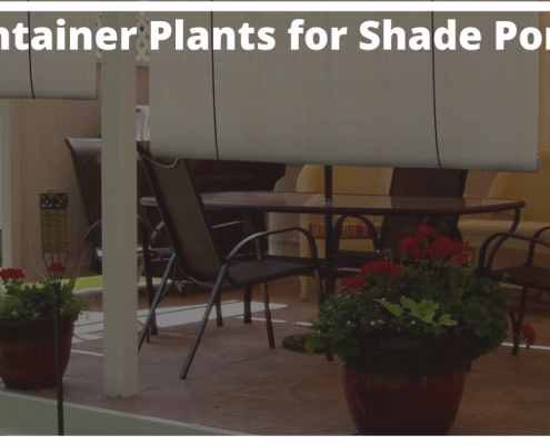 container plants for shade porch